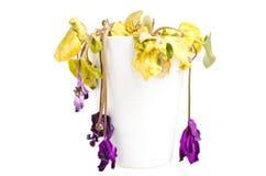 Flor muerta aislada Fotos de archivo