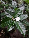 Flor muito agradável de Bella em uma árvore do bebê imagens de stock