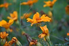 Flor muito beautyful Foto de Stock