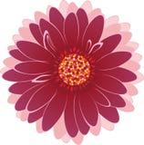 Flor multicolora Imagenes de archivo