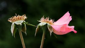 Flor; flor; multicoloured imagens de stock