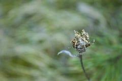 Flor murcho, desvanecida no fundo abstrato Fotografia de Stock Royalty Free