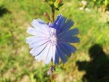 Flor Muy bonito Fotos de archivo