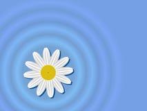 Flor na água ilustração royalty free