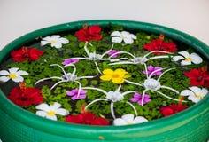 Flor na água Imagens de Stock