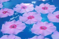 Flor na água azul Imagem de Stock Royalty Free