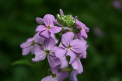 Flor na flor imagem de stock
