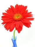 Flor na cópia azul do vaso Fotografia de Stock