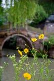 Flor na chuva Fotos de Stock