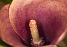 Flor na flor Foto de Stock