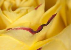 Flor na flor Fotografia de Stock