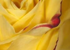 Flor na flor Imagens de Stock