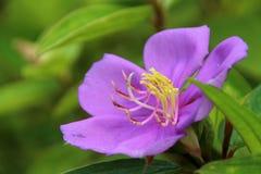 A flor na flor completa Imagem de Stock Royalty Free