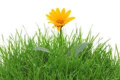 Flor na grama imagem de stock