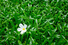 Flor na grama Fotos de Stock