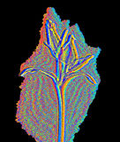 Flor na luz infra-vermelha Fotos de Stock Royalty Free
