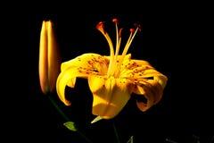 Flor na luz solar em um fundo escuro fotos de stock royalty free
