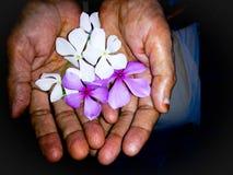Flor na mão fotos de stock royalty free