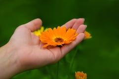Flor na mão Imagens de Stock