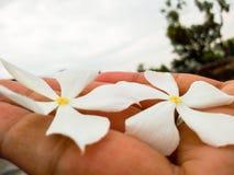 Flor na mão foto de stock royalty free