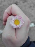 Flor na mão da posse Imagem de Stock Royalty Free