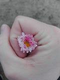 Flor na mão da posse Foto de Stock
