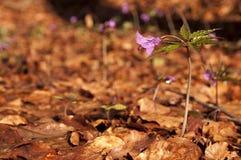 Flor na mola Imagem de Stock Royalty Free
