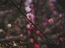 Flor na mola Fotos de Stock Royalty Free