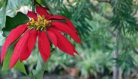 Flor na natureza Fotos de Stock Royalty Free
