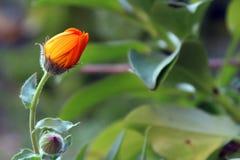 Flor na natureza Foto de Stock