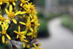Flor na natureza Imagem de Stock