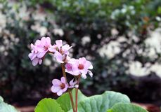 Flor na natureza Imagens de Stock