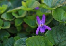 Flor na natureza Imagem de Stock Royalty Free