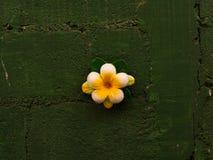 Flor na parede Fotos de Stock Royalty Free