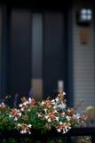 Flor na porta da rua Foto de Stock Royalty Free