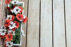 Flor na prancha de madeira Imagem de Stock Royalty Free