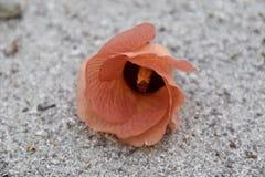 Flor na terra Imagem de Stock Royalty Free