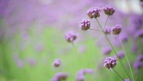 Flor na terra da parte traseira da natureza do borrão do jardim filme