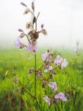 Flor nas madeiras Foto de Stock
