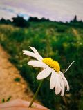 Flor nas montanhas Imagens de Stock Royalty Free