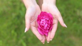 A flor nas palmas das mãos filme