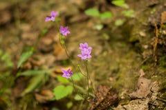 Flor nas pedras imagens de stock royalty free