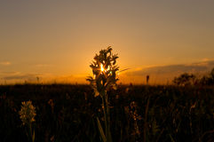 Flor nas raias do sol Fotos de Stock