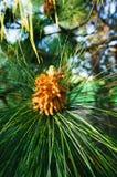 Flor nativa Fotos de archivo
