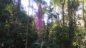 Flor nativa Fotos de archivo libres de regalías