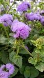 Flor natural Fotos de Stock