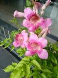 Flor natural fotos de archivo libres de regalías