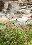 Flor natural da água Foto de Stock