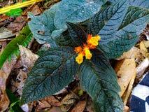 Flor natural fotografia de stock