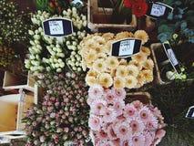 Flor, naturaleza, floral fotos de archivo libres de regalías